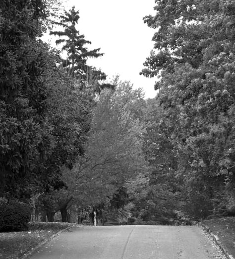 Fall Road b and w
